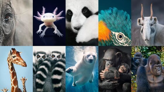 Image of endangered species, which dramatize the need to reverse the control of nature