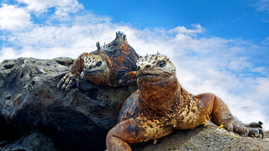 Image of Galapagos lizards in this novel the author said is not science fiction.